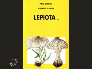 Fungi Europaei, Lepiota